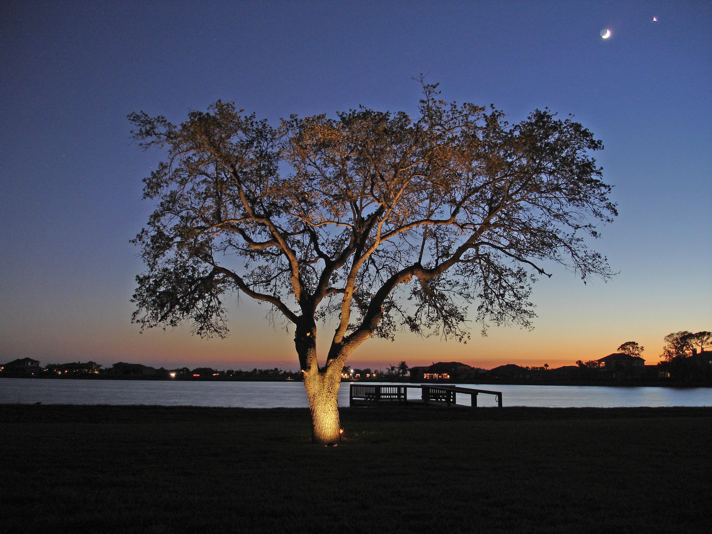 Dramatic Tampa Bay Tree Lighting Outdoor Lighting