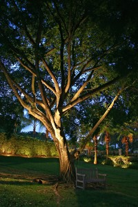 Large trees are the royalty of landscape. Our eyes are immediately drawn to them.