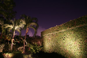 Your palm trees can stand out at night with the right kind of outdoor lighting fixture.