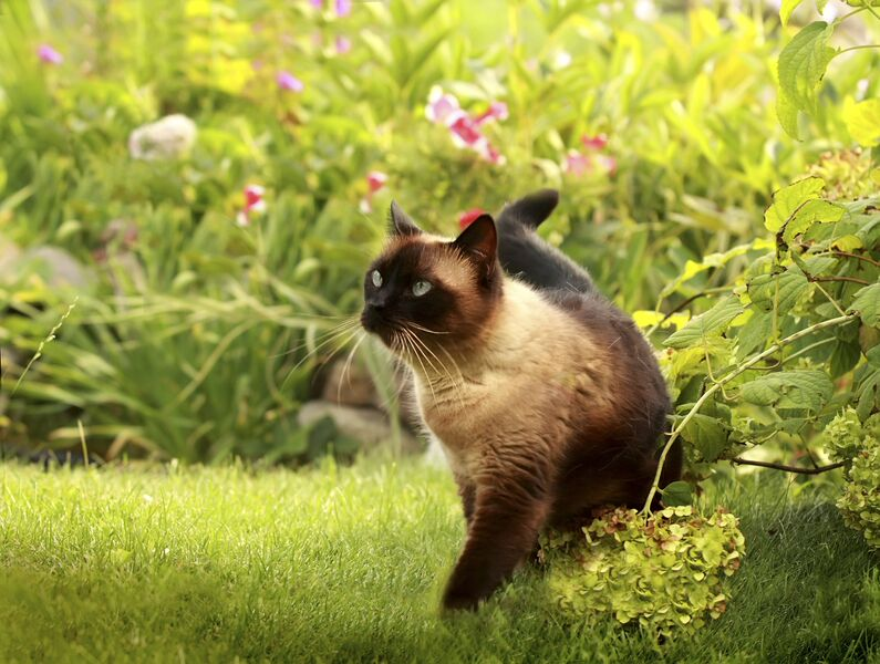 All your pets that spend time outdoors will benefit from outdoor lighting!