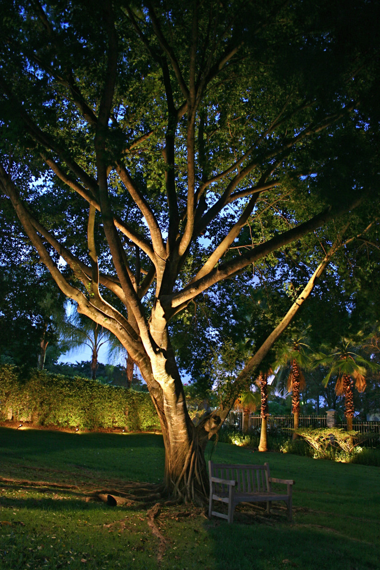 Up Lighting on tree's can make a dramatic statement